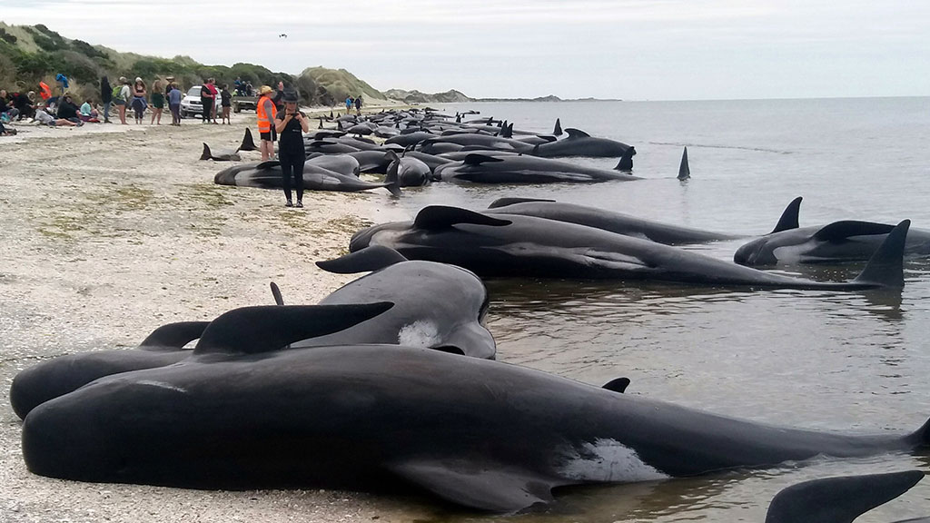 Массовые самоубийства дельфинов. что с миром?