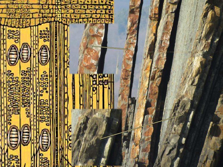 Гистологический срез дерева и Скалы Киселева