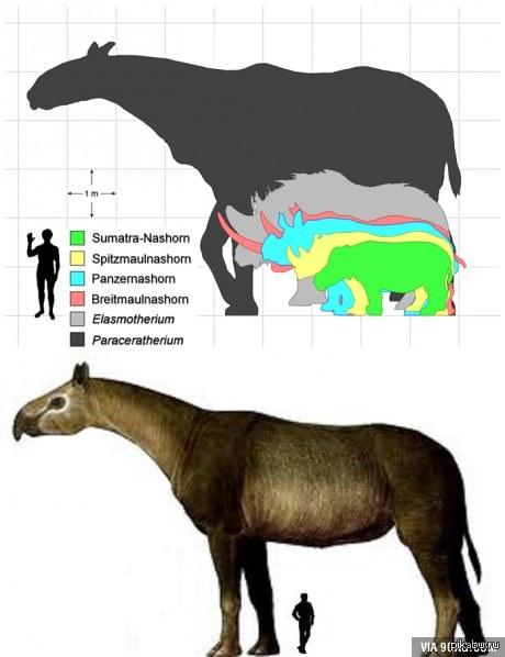 Гигантизм живых организмов прошлого sibved