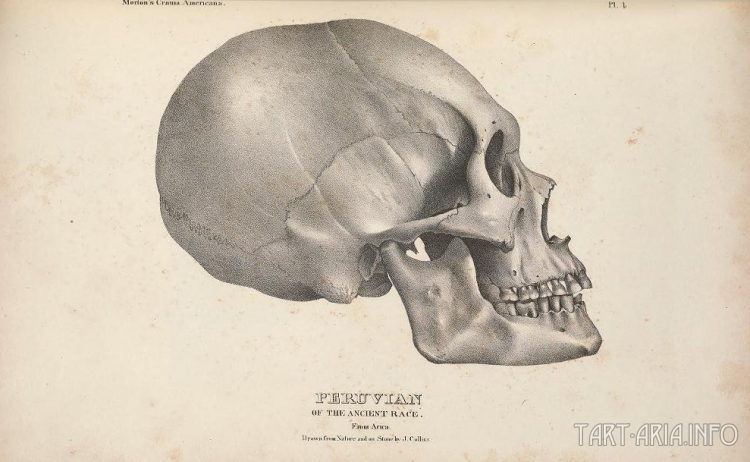 вытянутый череп