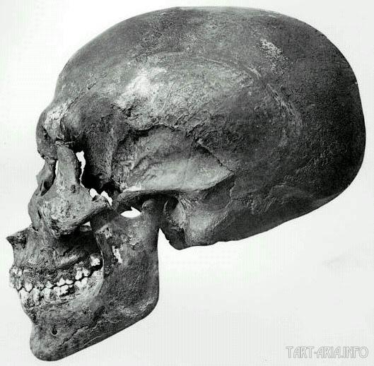 череп Эхнатона